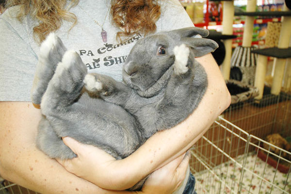 Bunny for Adoption at SPCA - NapaPets